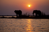 Elephants Silhouettes Photographic Print by  outdoorsman