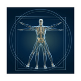 Skeleton In Vitruvian Prints by  Orla