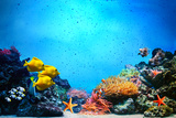 Underwater Scene Poster von PHOTOCREO Michal Bednarek