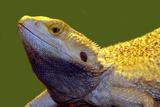 Lizard Poster von  yuran-78