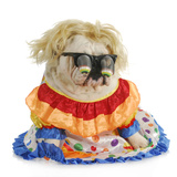 Silly Dog - English Bulldog Wearing Silly Glasses And Clown Costume Posters by Willee Cole