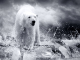 White Polar Bear Hunter On The Ice In Water Drops Photographic Print by  yuran-78