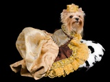 Elegant Pet And Dog Clothing Isolated On Black Posters by  vitalytitov