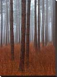 Fog and Trees Stretched Canvas Print by John Bartosik