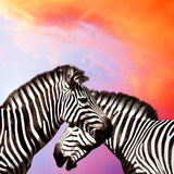 Two Zebras On The Sky Prints by  yuran-78