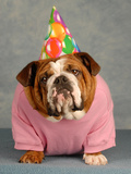Birthday Dog On Blue Photographic Print by Willee Cole