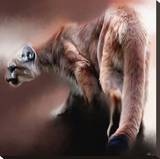 Cougar Stretched Canvas Print by Paul Miners