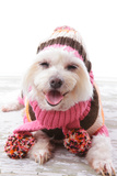 Happy Dog In Warm Woollen Sweater And Scarf Prints by  lovleah
