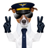 Pilot Dog Prints by Javier Brosch