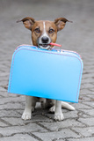 Homeless Dog Holding A Blue Big Bag Photo by Javier Brosch