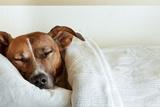 Sleeping Dog Fotografisk tryk af Javier Brosch