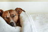 Sleeping Dog Photographic Print by Javier Brosch