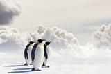 Emperor Penguins In Antarctica Fotografisk tryk af Jan Martin Will