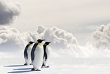 Emperor Penguins In Antarctica Photographic Print by Jan Martin Will
