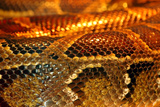 Snake Photographic Print by  yuran-78