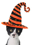Cross Eyed Kitten Wearing A Halloween Witch Hat Photographic Print by  Hannamariah