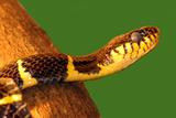 Snake Poster by  yuran-78