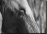 Elephant Eye Stretched Canvas Print by Jamie Hodgson
