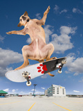 Skate Dog Photographic Print by  graphicphoto