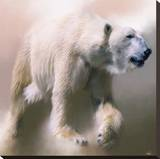 Polar Bear Stretched Canvas Print by Paul Miners