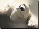 Polar Talk Stretched Canvas Print by Paul Miners