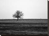 Lonely Tree Stretched Canvas Print by Brian Little
