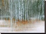 Misty Stretched Canvas Print by Tatiana Lopatina