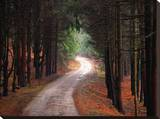 Trees and Winding Laneway Stretched Canvas Print by John Bartosik