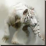 White Tiger Stretched Canvas Print by Paul Miners