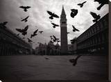 Pigeons, Venice Italy Stretched Canvas Print by Byron Yu