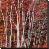 Autumn II Stretched Canvas Print by Klaus Ortmeyer