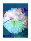 Dahlia Orchid Photographic Print by Alaya Gadeh