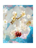 White Orchid Flowers Poster by Alaya Gadeh