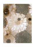 Monotone Blossoms I Photographic Print by Alaya Gadeh