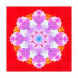 Pink Blossom Mandala Circle Poster por Alaya Gadeh