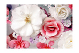 Poetic White Garden Rose Photographic Print by Alaya Gadeh