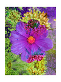 Violet Vlossom Abstract Photographic Print by Alaya Gadeh