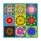 Flower Mandala Collection No 25 Photographic Print by Alaya Gadeh
