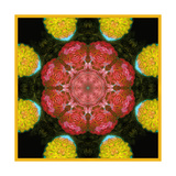Red Blossom Mandala II Pôsters por Alaya Gadeh