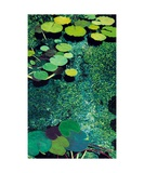 Green Shimmering Pond Photographic Print by Allan P. Friedlander