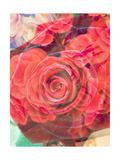 Red Rose Synphony No 1 Photographic Print by Alaya Gadeh