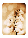 Hint Of Orchid II Photographic Print by Alaya Gadeh