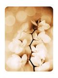 Hint Of Orchid II Pôsters por Alaya Gadeh