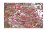 Poetic Cherry Tree Impession Photographic Print by Alaya Gadeh