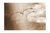 Couple Of Sea Gulls Photographic Print by Alaya Gadeh