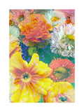 Summer Summer Blossoms Photographic Print by Alaya Gadeh