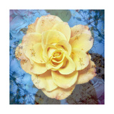 Yellow Rose With Ornaments Photographic Print by Alaya Gadeh