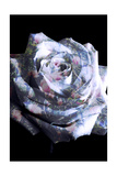 Rose With Floral Spring Tree Ornaments Photographic Print by Alaya Gadeh