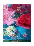 Water Blossoms No 26 Photographic Print by Alaya Gadeh