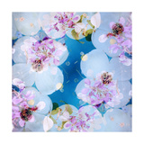 White Juwel Blossoms Photographic Print by Alaya Gadeh